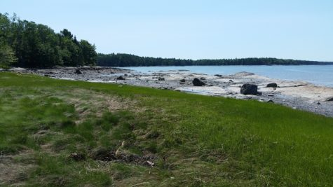 Grass leads to rocky shore at Carter Nature Preserve