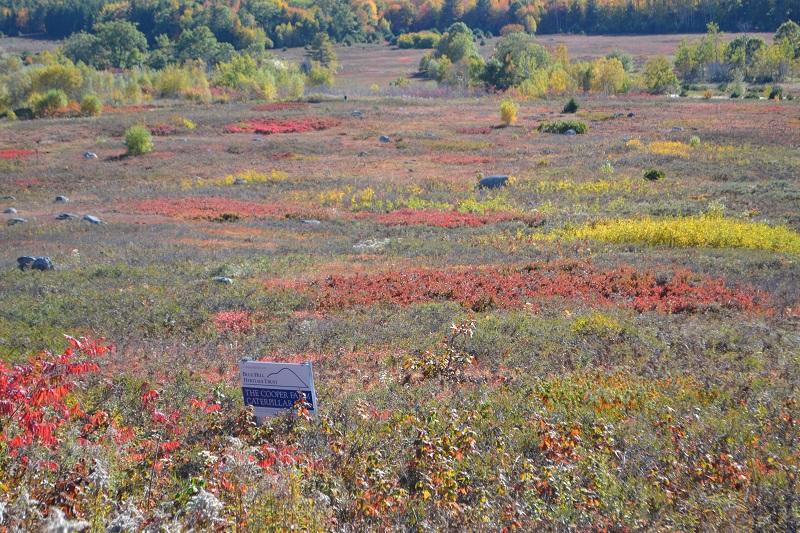 Cooper Farm October 2015 field fall colors