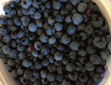 Cooper Farm blueberries
