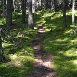 Cooper Farm woods trail & moss