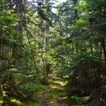 Cooper Farm woods trail