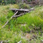 Furth Trail