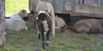 Horsepower Farm Tour